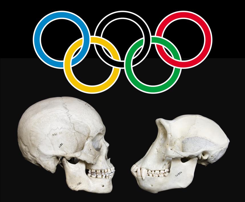 evolution-olympics.fw