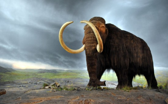 History-mystery-5-wooly-mammoths-jpg