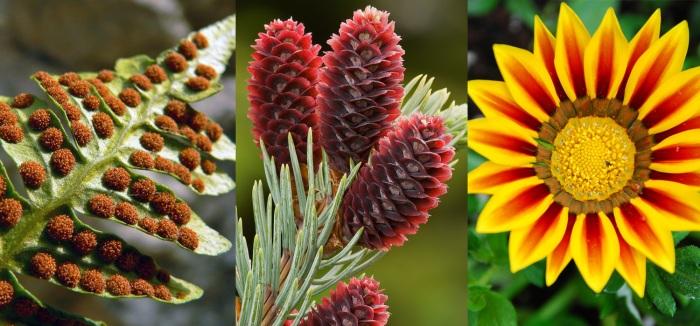 blog-laffitte1-plants